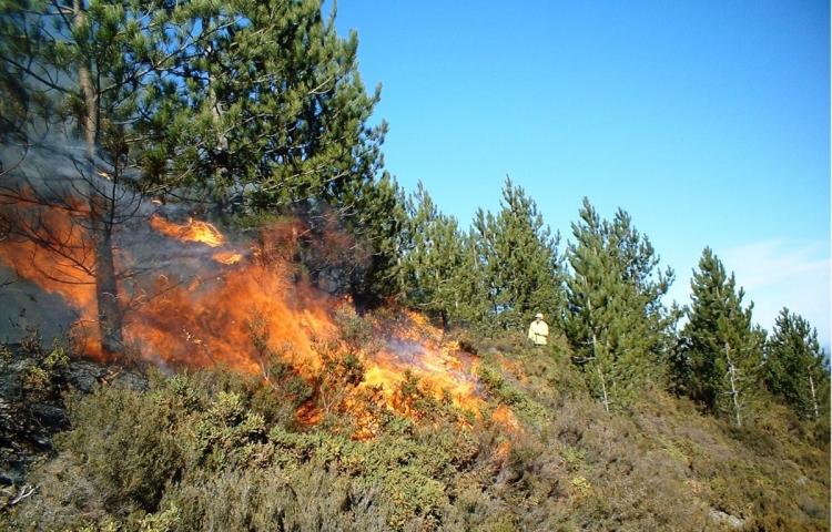 Ağsu və Şamaxı rayonlarının dağlıq və meşə ərazisində baş verən güclü yanğın söndürüldü