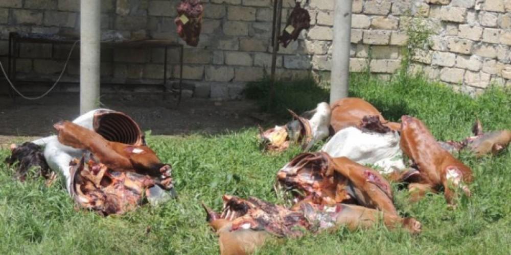 İsmayıllıda at əti satışının qarşısı alındı