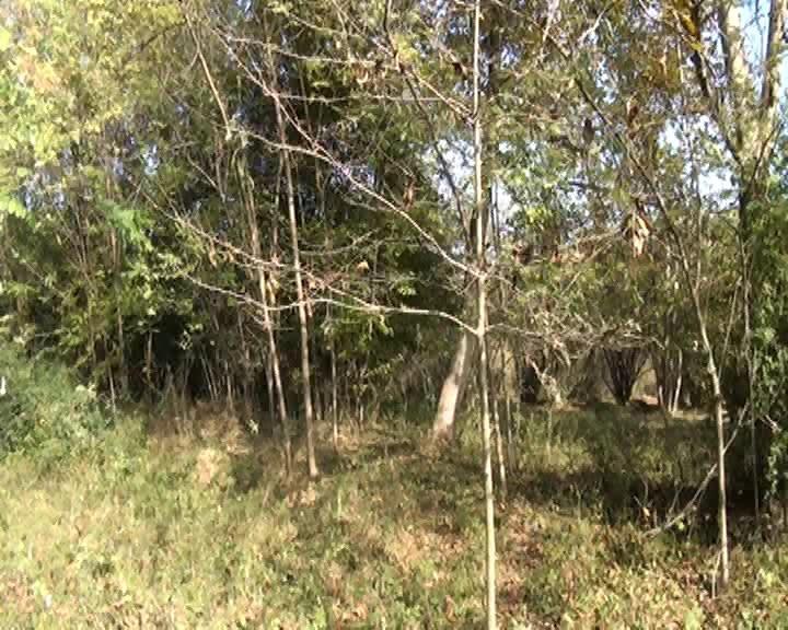 İsmayıllıda yanğının meşə ərazisinə keçməsinin qarşısı alınıb