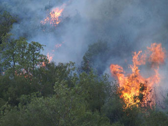 fire_forest_310713