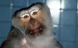 Monkey_111107