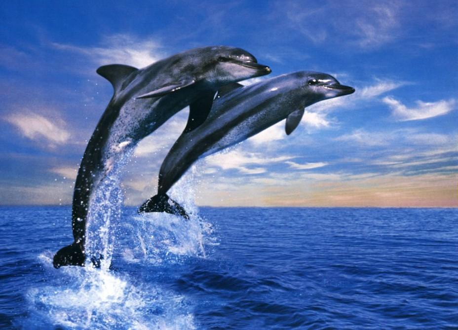 Abu-Dabi sahillərində hind donqar delfinləri aşkar edildi