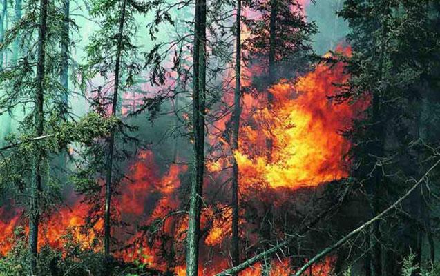 Meşə yanğınları 35 nəfərin həyatına son qoydu