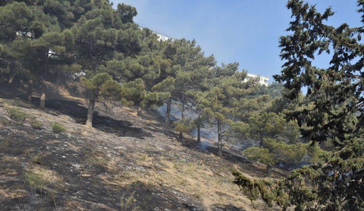 45 yaşlı kişi ağacdan dərəyə yıxılıb öldü