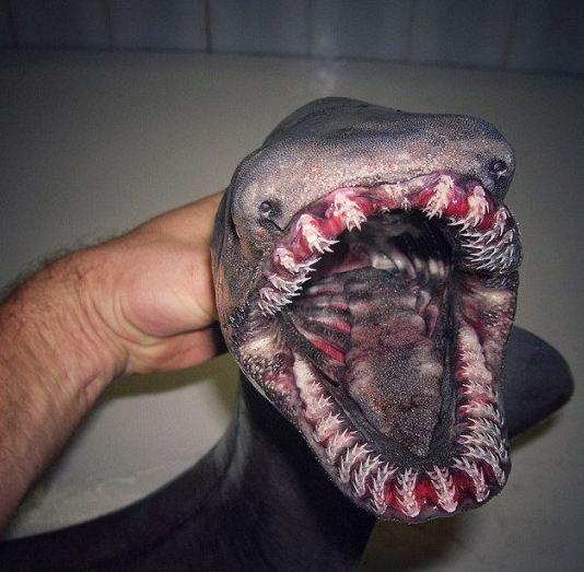 Portuqaliya sahillərində eramızdan əvvələ aid köpək balığı tutulub –