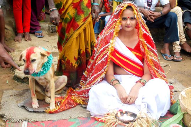 Bu ölkədə 7 yaşı tamam olan qızlar itlə evləndirilir