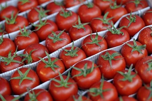 Azərbaycanda pomidor ucuzlaşacaq