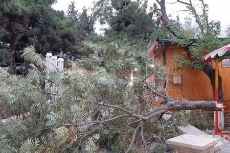 Bakıda parkda ağacın budaqları qırılaraq attraksionların üstünə düşüb