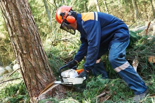 Tikinti şirkəti ağac kəsdiyinə görə 35 min manat cərimə edildi