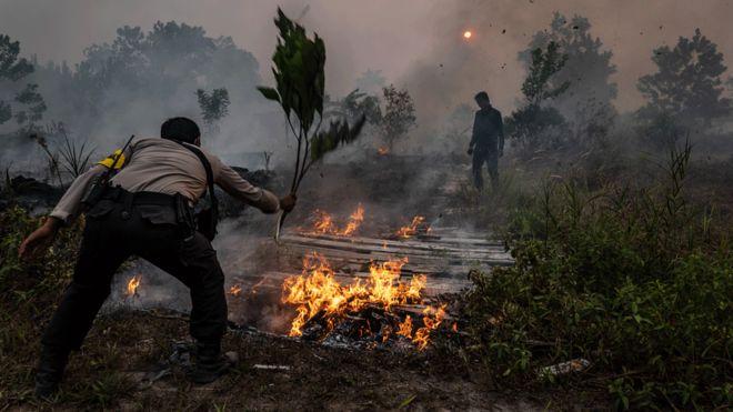 Avstraliyada meşə yanğınlarında 350 nadir təbiət heyvanı yanaraq ölüb – Video